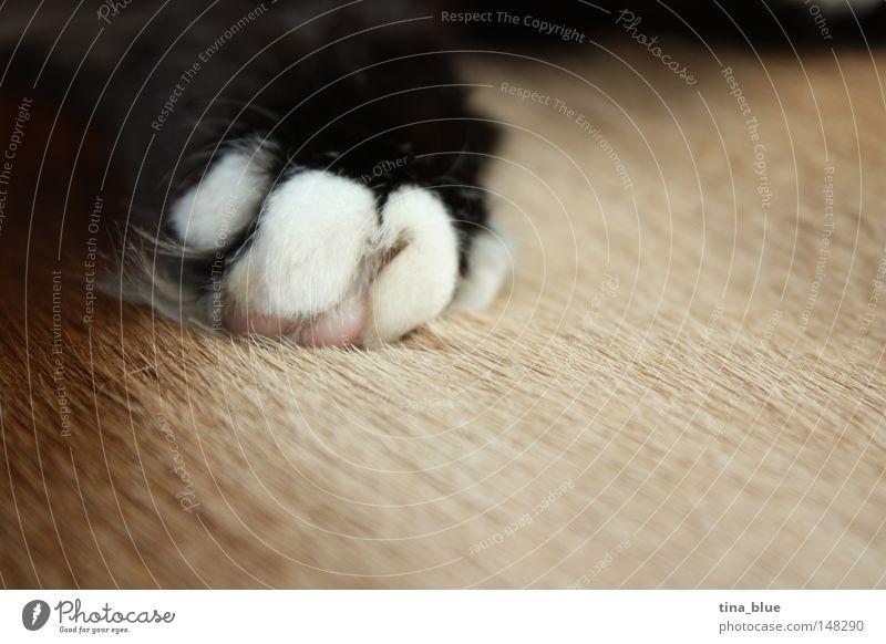 Katzenpfote Schwarzweißfoto Pfote Fell braun Krallen ruhig schlafen Frieden Makroaufnahme Säugetier Nahaufnahme friedlich Seeligkeit Tiefenunschärfe