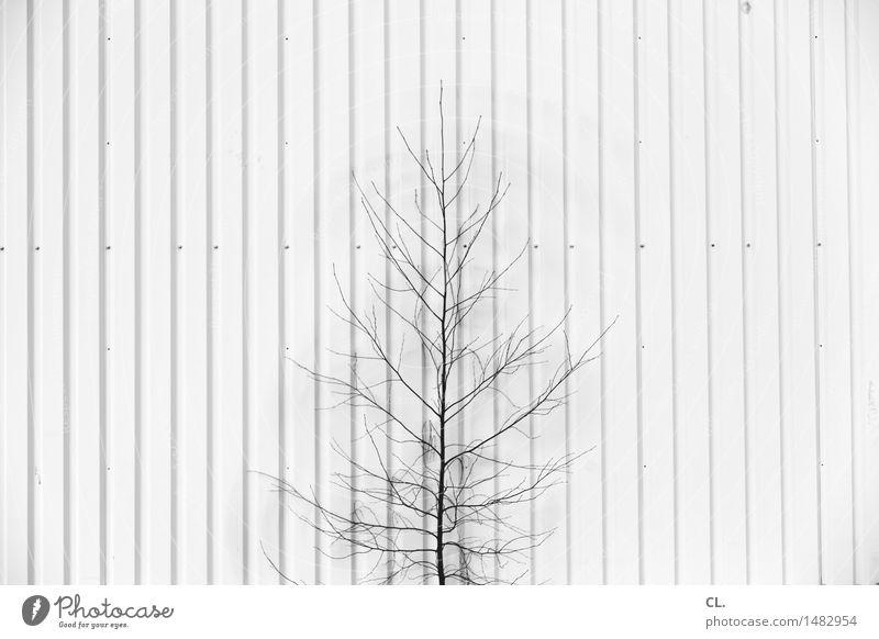 bäumchen Natur Baum Umwelt Wand Mauer klein Linie Wachstum
