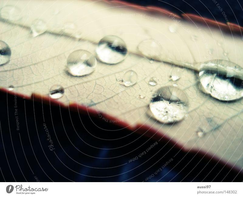 danach kam die Sonne... Blatt Traurigkeit Park Regen Wetter Wassertropfen Trauer Lichtbrechung Bruch