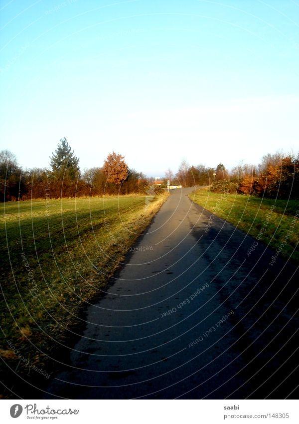 Herbsttraum Himmel Baum ruhig Einsamkeit Straße Herbst Gras träumen Feld frisch Aussicht Asphalt Klarheit