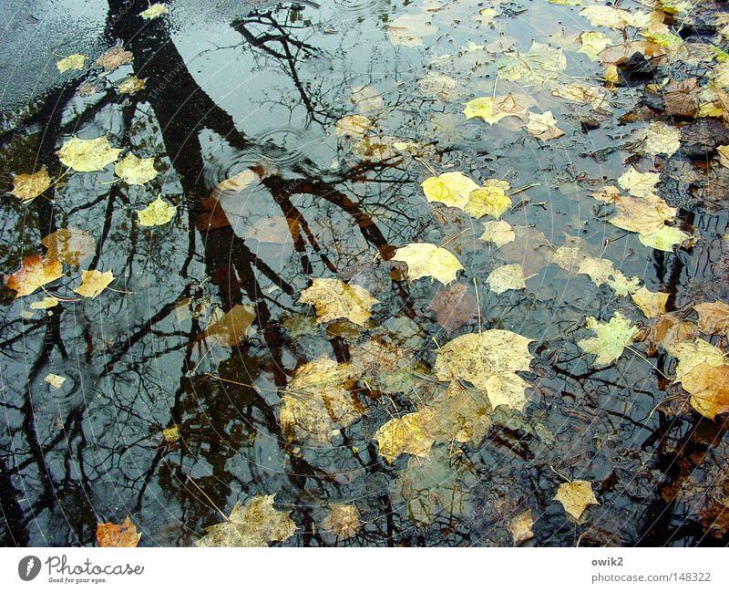 Tiefausläufer Umwelt Natur Landschaft Pflanze Wasser Herbst Klima Schönes Wetter Regen Baum Blatt Denken dunkel Idylle Vergänglichkeit verlieren spät Nachmittag