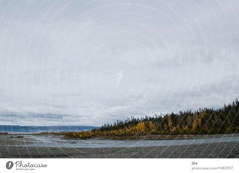 Flussmündung - Alaska 14 ruhig Ferne wandern Sportstätten Natur Landschaft Urelemente Wasser Wolken Herbst schlechtes Wetter Wind Wald Küste Meer Flußmündung