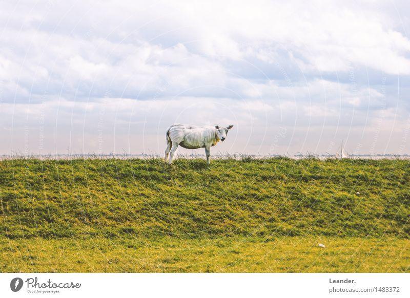Ganz schön Scha(r)f Himmel Natur Ferien & Urlaub & Reisen blau grün Sommer weiß Meer Landschaft Wolken Tier Umwelt gelb Herbst Wiese Gras