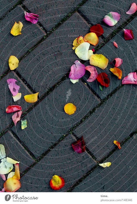 Drei Meter vor'm Besen Freude Glück Wege & Pfade Feste & Feiern liegen Dekoration & Verzierung Kopfsteinpflaster Tradition Mischung mehrfarbig Blütenblatt Ritual gestreut