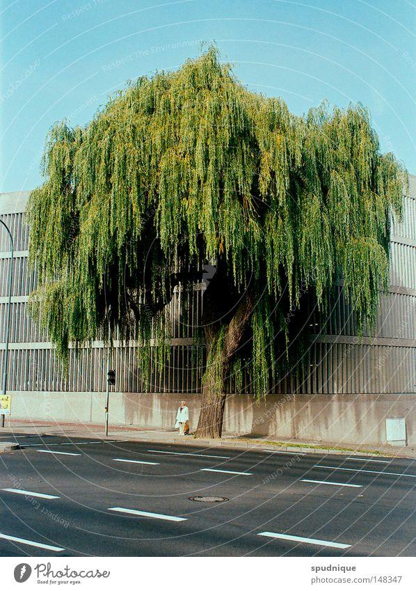 Fulda II Himmel grün Baum Pflanze Straße Graffiti Linie warten Verkehr Streifen Klarheit fallen Spuren Bürgersteig Weide Verkehrswege