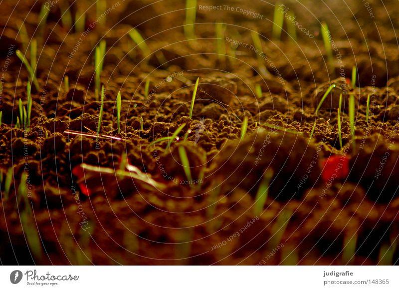 Acker Feld Erde Jungpflanze zart Pflanze Ackerbau Aussaat anbauen Landwirtschaft ländlich Ernährung Lebensmittel Herbst frisch neu Wachstum gedeihen Natur Farbe