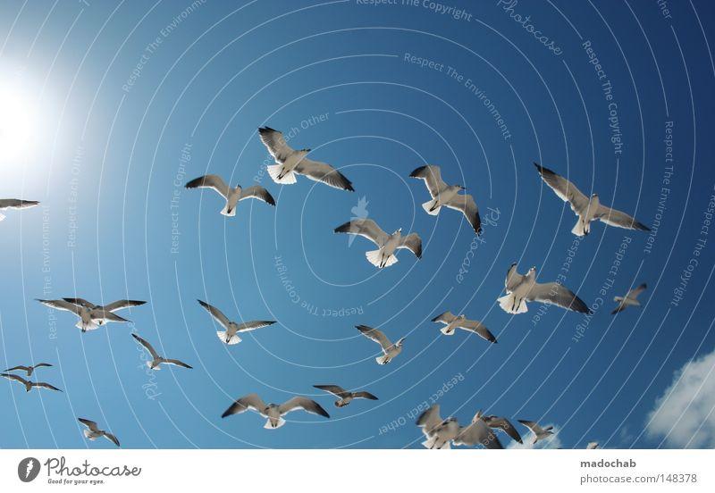 SCHWARMINTELLIGENZ Himmel blau Leben Bewegung Freiheit Luft Vogel fliegen frei mehrere Frieden Flügel Dynamik Sportveranstaltung Schweben Konkurrenz
