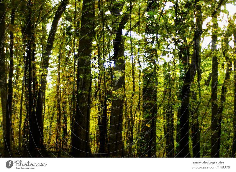 |||||300||||| Wald Baum Blatt Laubbaum Herbst Sommer Ast Unterholz unheimlich Schatten geschlossen Baumstamm Sträucher Waldlichtung Jahreszeiten Stimmung