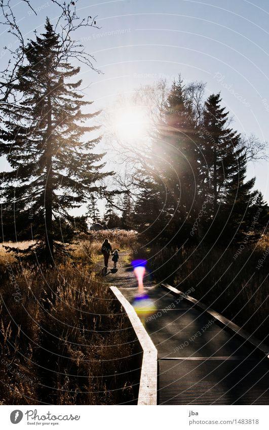 spazieren - Alaska 16 harmonisch Zufriedenheit Ausflug Sonne wandern Familie & Verwandtschaft Natur Herbst Schönes Wetter Tanne Homer USA Steg Wege & Pfade