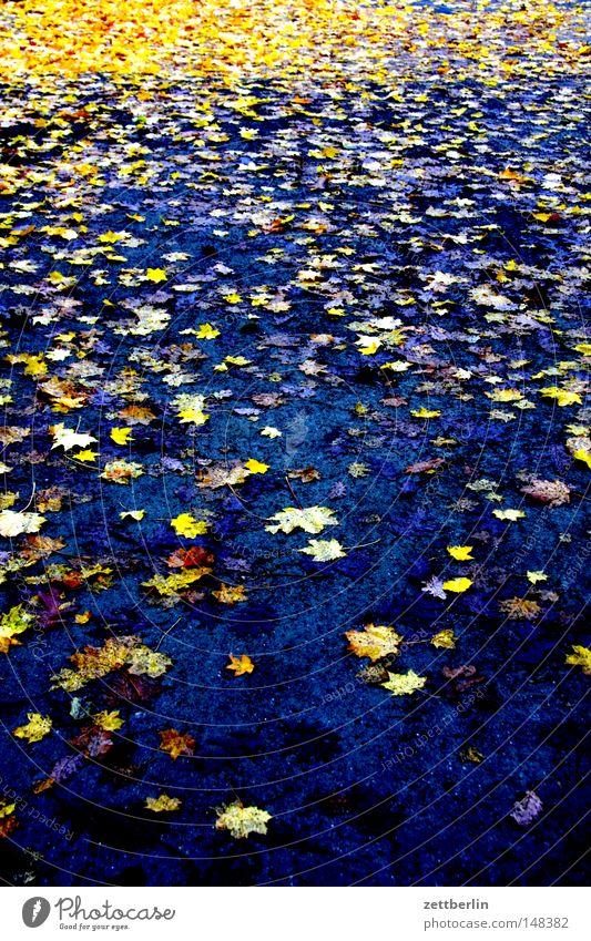 Laub Blatt Herbst Traurigkeit Park Wetter Herbstlaub Oktober Goldregen