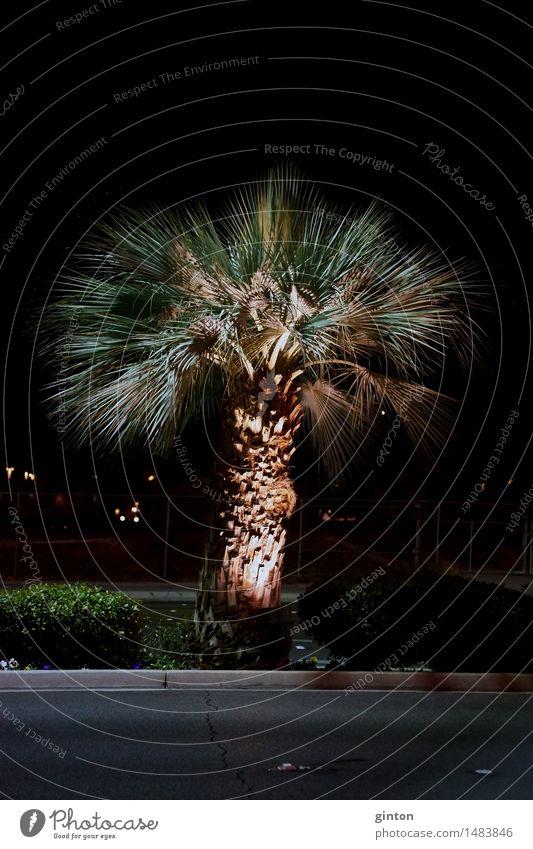 Palme in der Nacht Ferien & Urlaub & Reisen Pflanze Baum Blatt Straße dunkel Nachtaufnahme Palmengewächs Arecaceae Palmae Zierbaum Beleuchtung Scheinwerfer