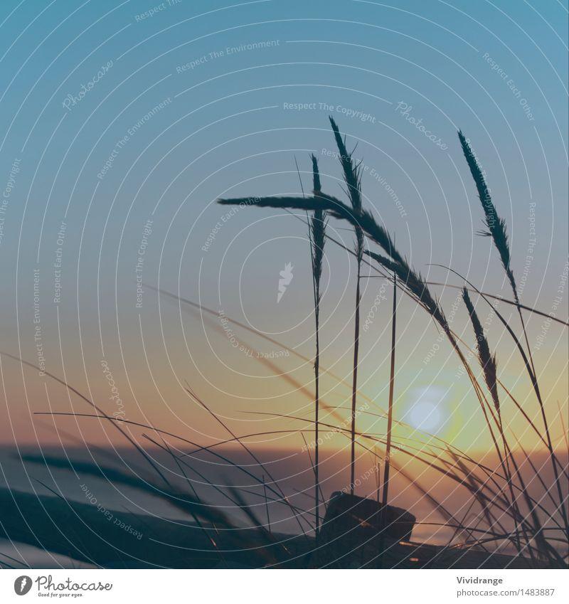 Nachmittag Sonnenuntergang am Strand Ferien & Urlaub & Reisen Sommer Meer Natur Landschaft Pflanze Erde Wasser Himmel Wolkenloser Himmel Nachthimmel