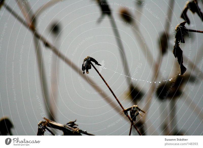 Zusammen schaffen wir das... Hand Winter kalt Herbst Holz Regen Eis Nebel Wassertropfen Tropfen gefroren Stengel Tau frieren Spinne Spinnennetz