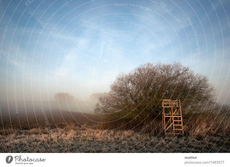 Hochstand Landschaft Himmel Wolkenloser Himmel Winter Wetter Schönes Wetter Nebel Pflanze Baum Gras Sträucher Wiese Feld Menschenleer Hochsitz kalt blau braun