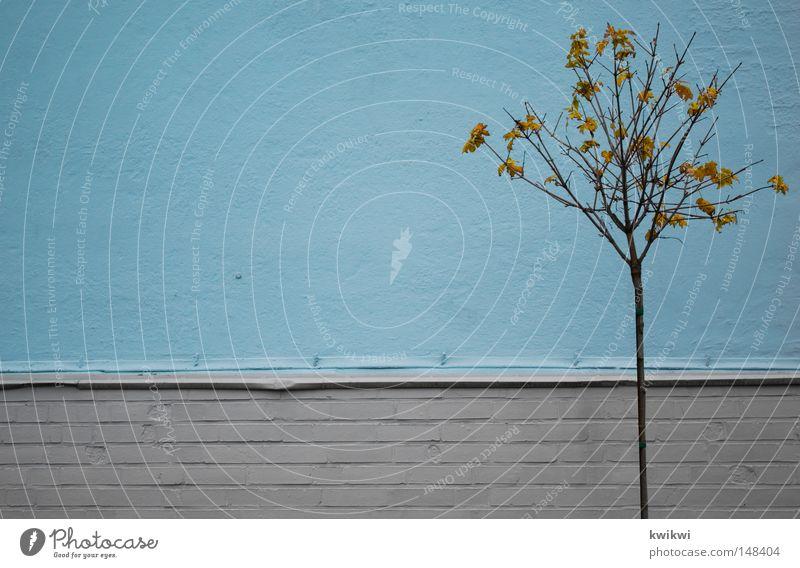 dem ende entgegen Blatt kalt Herbst Wand grau Stein Mauer Linie einfach fallen frieren wenige bewegungslos kahl Ödland hell-blau