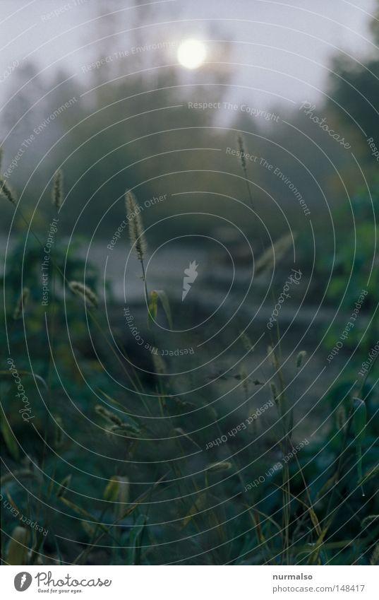 Gefühl Grünblaugrau Natur Wasser Sonne Herbst Gefühle Gras Garten Stimmung Erde Wohnung Nebel Perspektive Wassertropfen trist Sträucher Tropfen