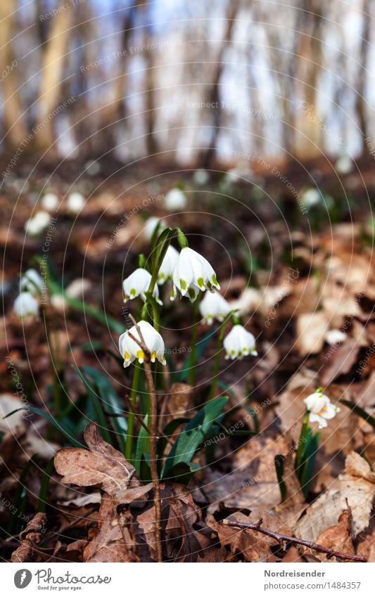 Märzenbecher Natur Pflanze schön Blume Landschaft Wald Umwelt Frühling natürlich Park Wachstum Erde Blühend Klima Schönes Wetter Wandel & Veränderung