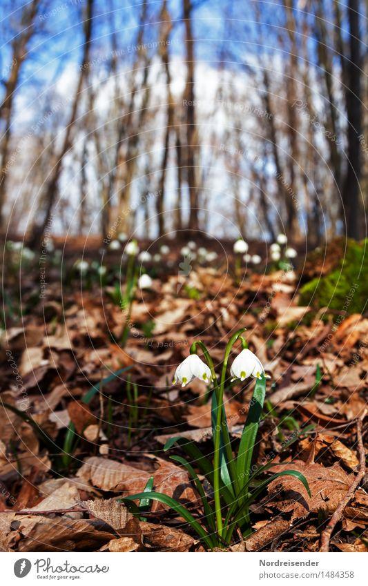 Frühling Sinnesorgane wandern Umwelt Natur Landschaft Pflanze Erde Klima Schönes Wetter Blume Wildpflanze Park Wald Blühend Erholung Wachstum Duft Beginn