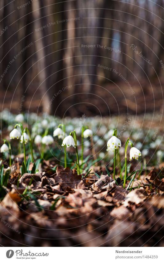 Waldlichtung wandern Umwelt Natur Landschaft Pflanze Erde Frühling Blume Blühend Wachstum einzigartig Hoffnung Stimmung Umweltschutz Wandel & Veränderung