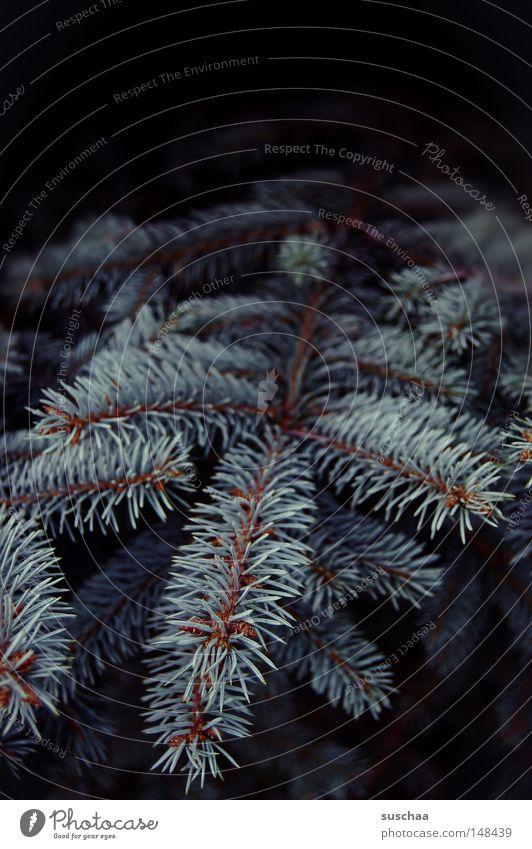 ohh tannenbaum .. Weihnachten & Advent Baum Pflanze Einsamkeit Winter dunkel kalt Weihnachtsbaum Tanne Feiertag Forstwirtschaft Nadelbaum Tannennadel