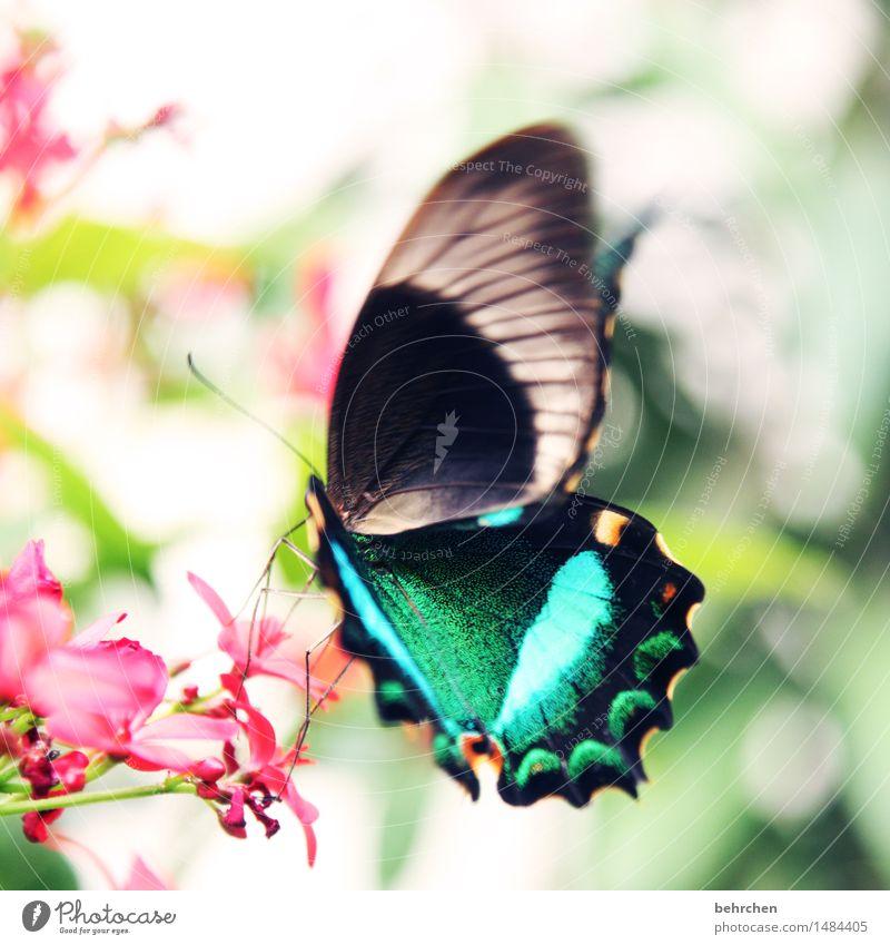 ...nachher Natur Pflanze schön Blume Blatt Tier Blüte Wiese Garten außergewöhnlich fliegen Park elegant Wildtier Sträucher Flügel