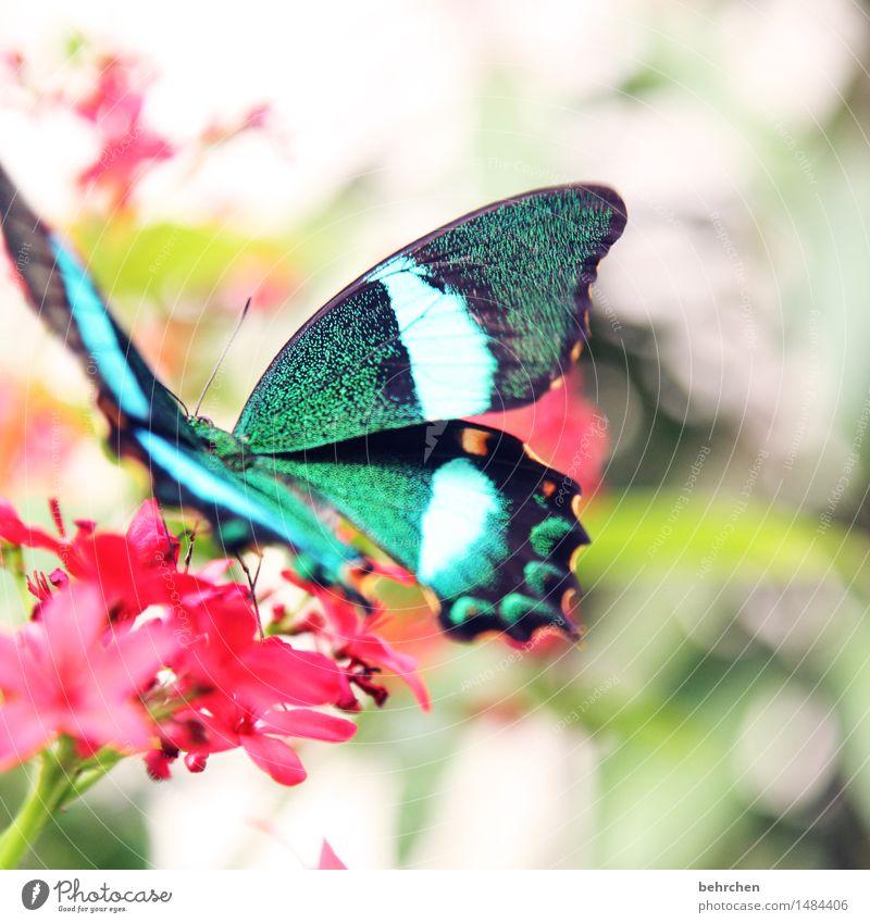 2000... Natur Pflanze Tier Frühling Sommer Blume Blatt Blüte Garten Park Wiese Wildtier Schmetterling Flügel 1 beobachten Blühend Erholung fliegen Fressen