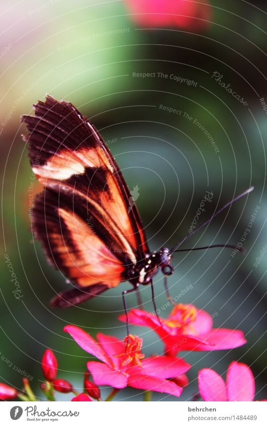 fliegengewicht Natur Pflanze Tier Sommer Blume Blatt Blüte Garten Park Wiese Wildtier Schmetterling Tiergesicht Flügel Beine Fühler Facettenauge 1 beobachten
