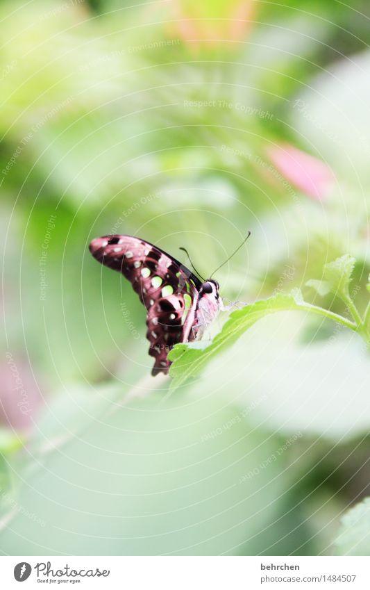 versteckt Natur Pflanze Tier Baum Sträucher Blatt Garten Park Wiese Wildtier Schmetterling Tiergesicht Flügel Fühler Auge 1 beobachten Erholung fliegen Fressen