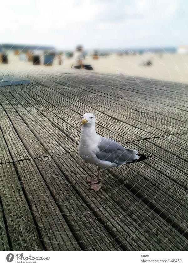 Tag am Meer Erholung Ferien & Urlaub & Reisen Tourismus Sommer Strand Natur Tier Sand Himmel Horizont Schönes Wetter Küste Wildtier Vogel Möwe 1 Holz genießen