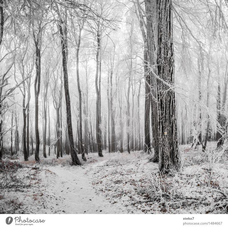 kalter Wald Winter Eis Frost Schnee frieren schwarz weiß Laubwald Winterurlaub Wegweiser Gedeckte Farben Außenaufnahme Menschenleer