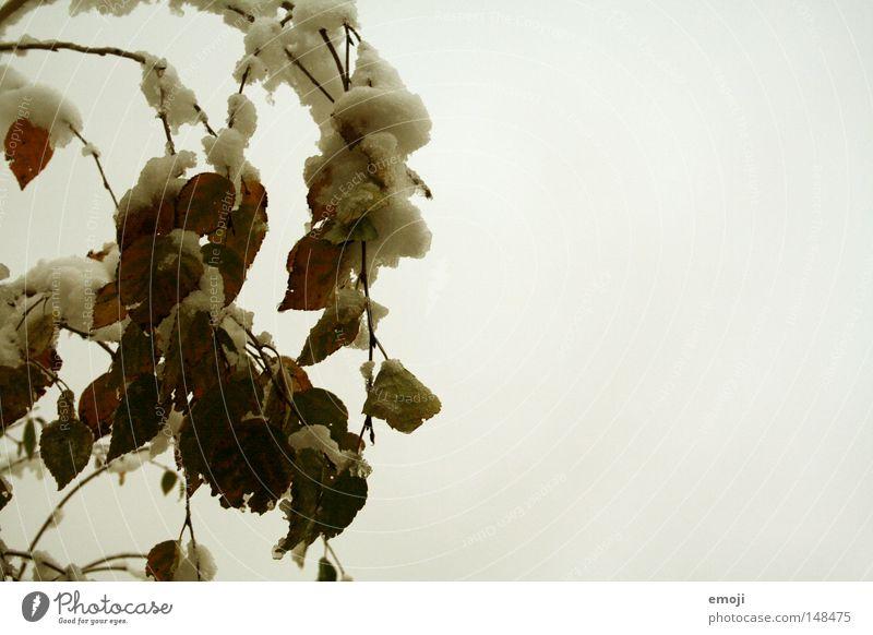 es schneielet Natur Baum Winter Blatt kalt Schnee trist Jahreszeiten trüb Monochrom