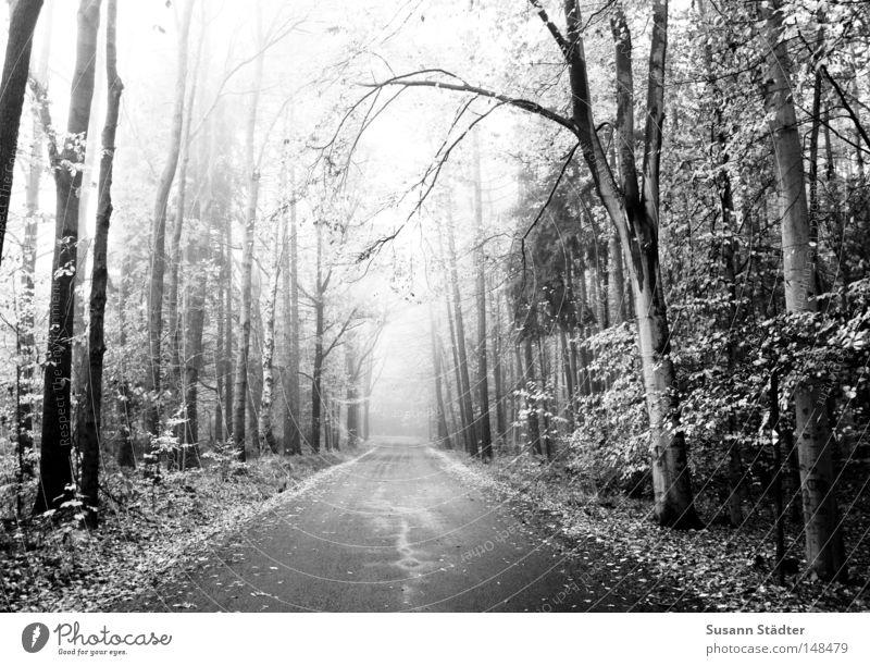 Nebelweg weiß Baum schwarz Ferne Straße Wald Wege & Pfade KFZ fahren Asphalt Verkehrswege Reifen Schwarzweißfoto ungewiss Seitenstreifen