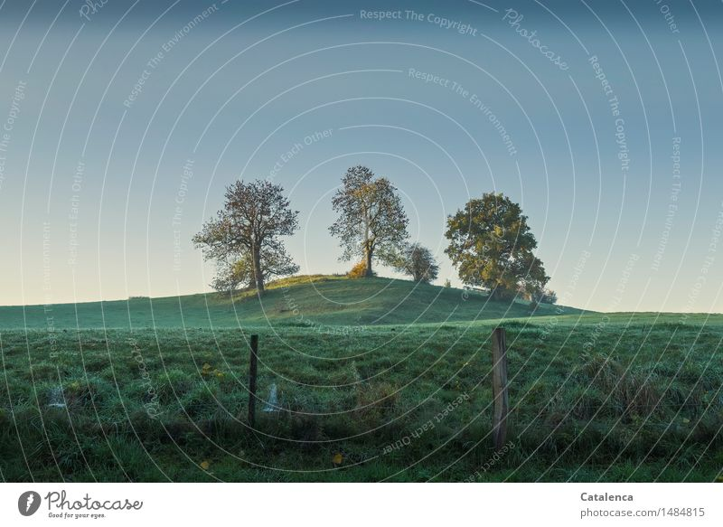 Das Blau davor Himmel Natur Pflanze blau grün schön Baum Erholung Landschaft Umwelt Herbst Wiese braun Stimmung Zufriedenheit wandern