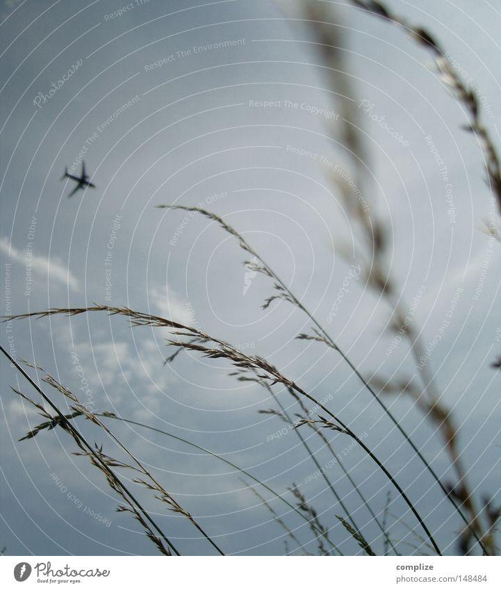 Insektenplage Flugzeug Abdeckung Gras Himmel Feld Wind Flughafen Luftverkehr gräßer Korn Müsli Flugbahn Ferien & Urlaub & Reisen Sturm grass Wolken