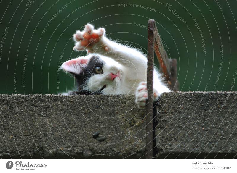 gib mir fünf! Erholung Freiheit Mauer Wand Fell Katze Pfote Metall genießen liegen kuschlig weich schwarz weiß bequem lau strecken Katzenbaby winken kratzen