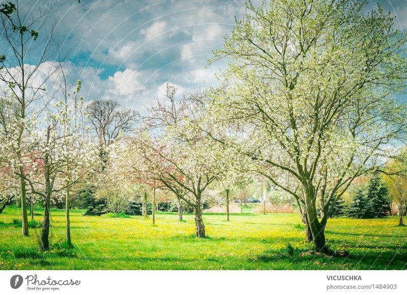 Blühende Bäume in Garten oder Park . Frühling Natur Himmel Natur Pflanze Baum Landschaft Blatt Blüte Frühling Stil Lifestyle Garten Design Park Blühend Schönes Wetter Rasen
