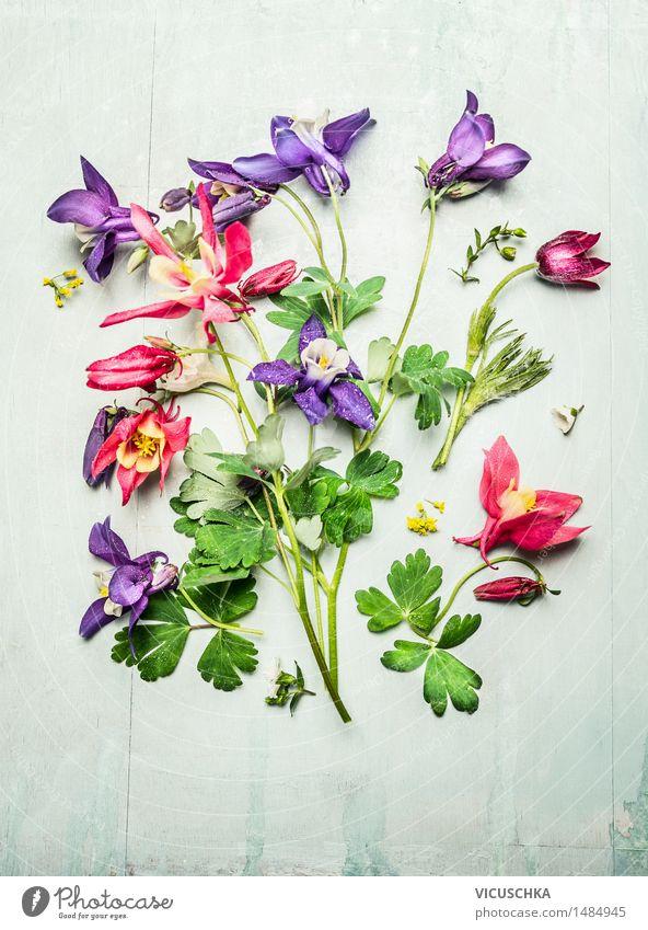 Frühling bunten Gartenblumen , Akelei Stil Design Sommer Dekoration & Verzierung Tisch Natur Pflanze Blume Blatt Blüte Blumenstrauß Ornament Blühend gelb rosa