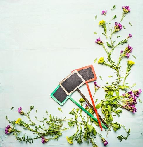 Frühling oder Sommer Pflanzen mit drei Gartenschild Natur Blume Blatt Blüte Stil Hintergrundbild Holz Design Schilder & Markierungen Gartenarbeit Grünpflanze