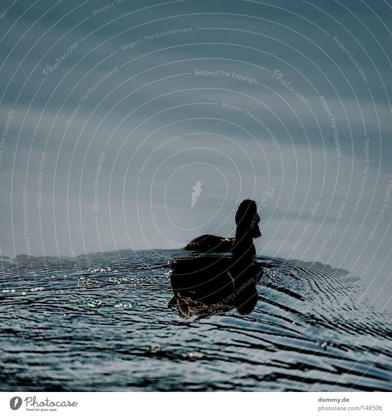mirror See Teich Reflexion & Spiegelung Feder Gegenlicht dunkel Schatten Silhouette Wolken Flüssigkeit Wellen ruhig Vogel Ente flugente Fluss Wasser