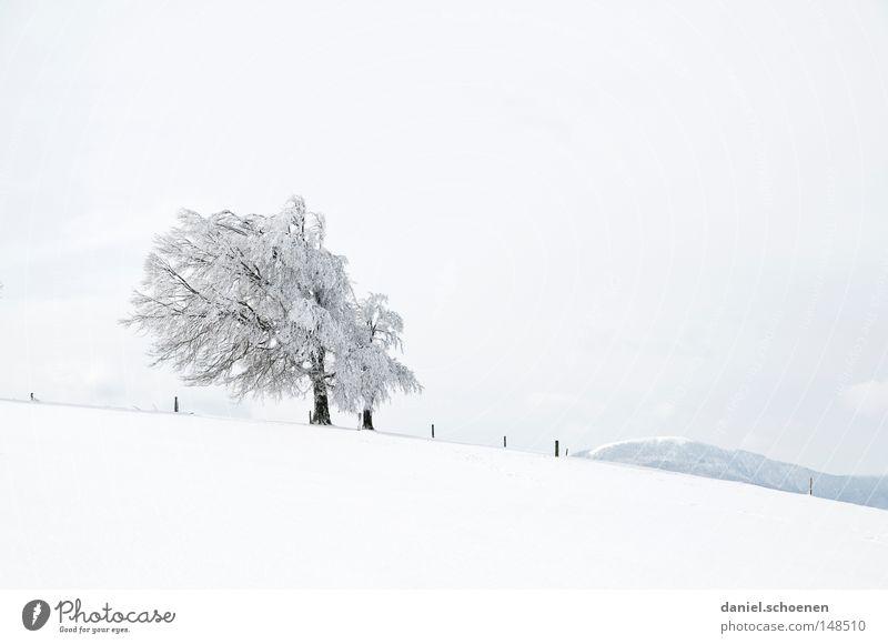 neue Weihnachtskarte 6 Winter Schnee Schwarzwald weiß Tiefschnee Ferien & Urlaub & Reisen Hintergrundbild Baum Schneelandschaft Natur Himmel Einsamkeit kalt