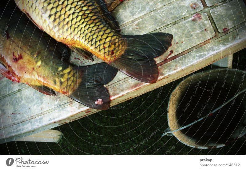 Weihnachtsverlierer Fisch Karpfen Tod Sensenmann Tisch Ernährung Protein Öl Flosse Tier Tierpaar Eimer Gras Garten töten Schlachtung Blut Ekel Gedärme