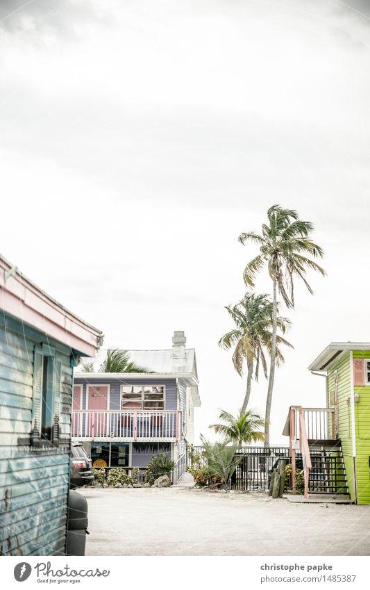 Unter Palmen Ferien & Urlaub & Reisen Sommer Haus Ferne hell Tourismus Häusliches Leben einzigartig USA heiß Hütte Sommerurlaub exotisch Kleinstadt