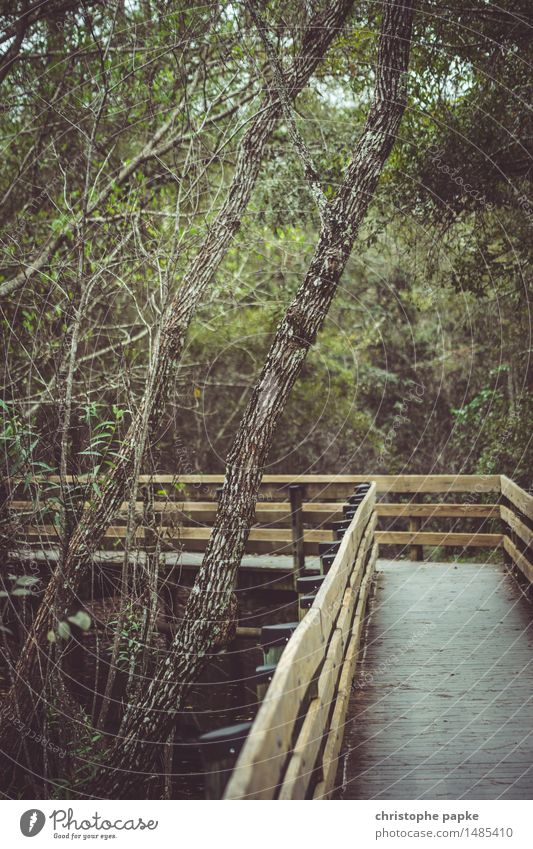 Der Holzweg Natur Ferien & Urlaub & Reisen Pflanze Baum Wald natürlich Park Tourismus wild nass USA Urwald Florida