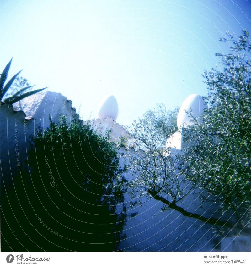 Kürzlich, mittags, bei Dali im Garten Sommer Sonne blau Himmel Spanien Katalonien Plaza de Catalunya Teatro Museo Dalí Gartenbau Terrasse Backstein Mauer weiß