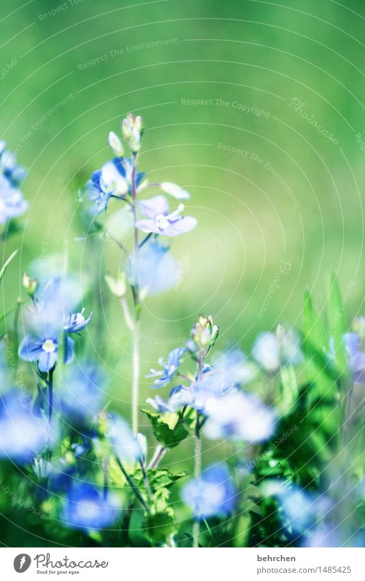 summertime Natur Pflanze Sommer schön Blume Blatt Blüte Frühling Wiese Gras Garten Park Feld Schönes Wetter Veronica