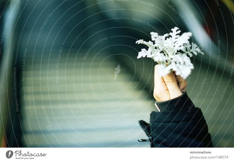 willkommen, winter. Hand Blume Pflanze Freude Winter kalt Herbst Arme Treppe Jacke U-Bahn Tiefenschärfe