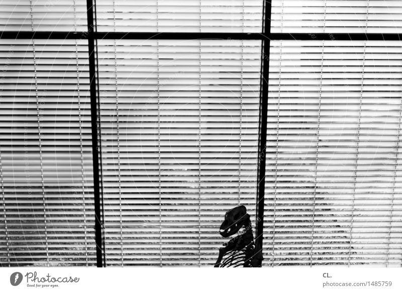 ausgestorben Wissenschaften Ausstellung Museum Fenster Tier Wildtier Skelett 1 Jalousie alt Vergangenheit Vergänglichkeit Anatomie Schwarzweißfoto Innenaufnahme