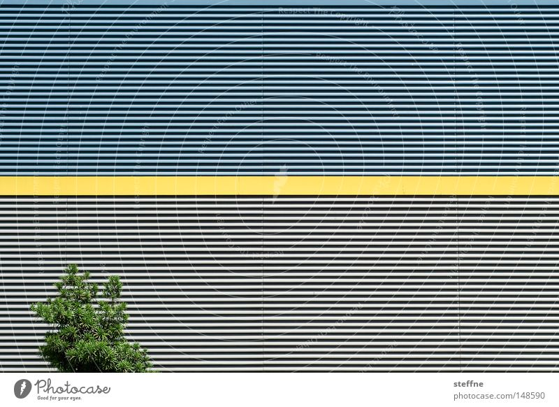 strich durch die rechnung | augenkrebs Natur Baum gelb Wand Linie Architektur Industrie modern Lagerhalle Halle unlogisch Widerspruch