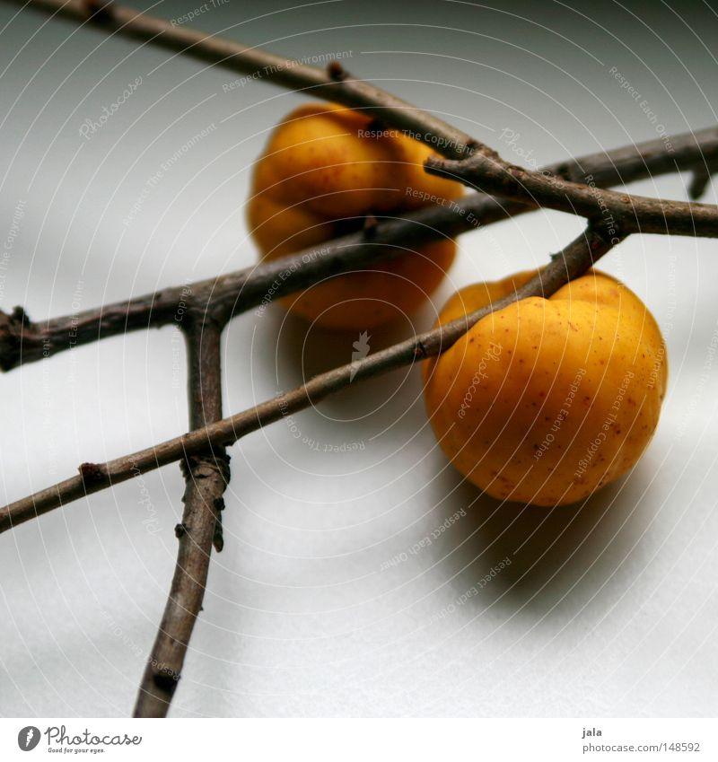 obstgehölze gelb Herbst Garten Park Frucht Ast Ernte Stillleben Gel Marmelade Ernährung Quitte