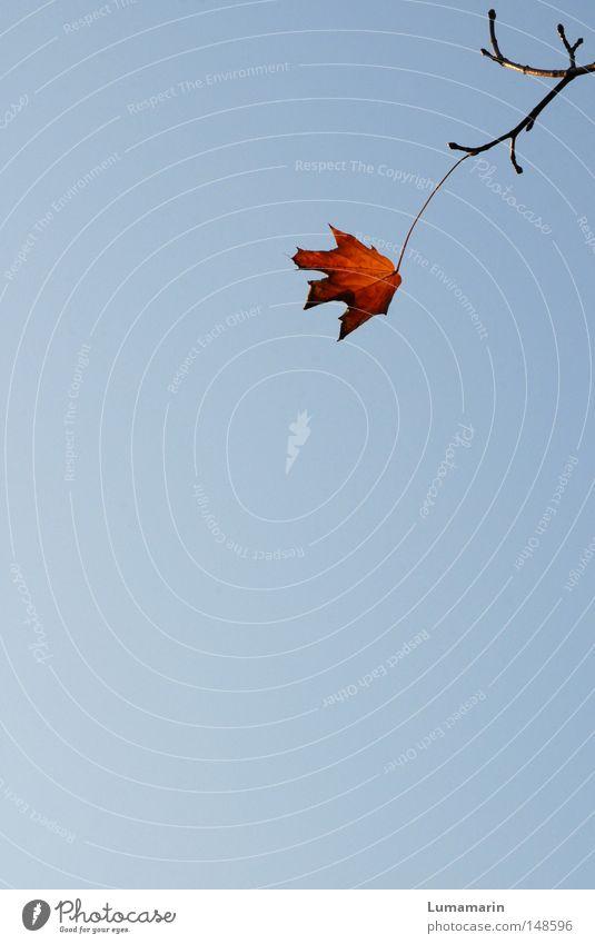 Solo Himmel Blatt Einsamkeit Erholung Herbst Kraft warten Kraft Ast Vergänglichkeit einzigartig stark Verbindung Jahreszeiten trocken Zweig